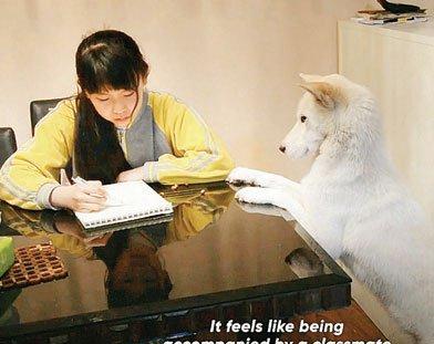 नहीं किया होमवर्क तो भौंक कर बता देगा कुत्ता