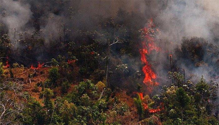 ब्राजील में अमेजन की आग बुझाने में सेना से मदद की गुहार