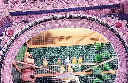 असम: दुर्गा पूजा पंडाल में नैचुरल लुक देने पिंजरे में रखे गए 300 पक्षी