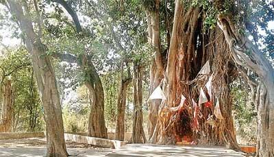 आदिवासियों के देवस्थान सहेजने सरकार ने मांगी जमीन